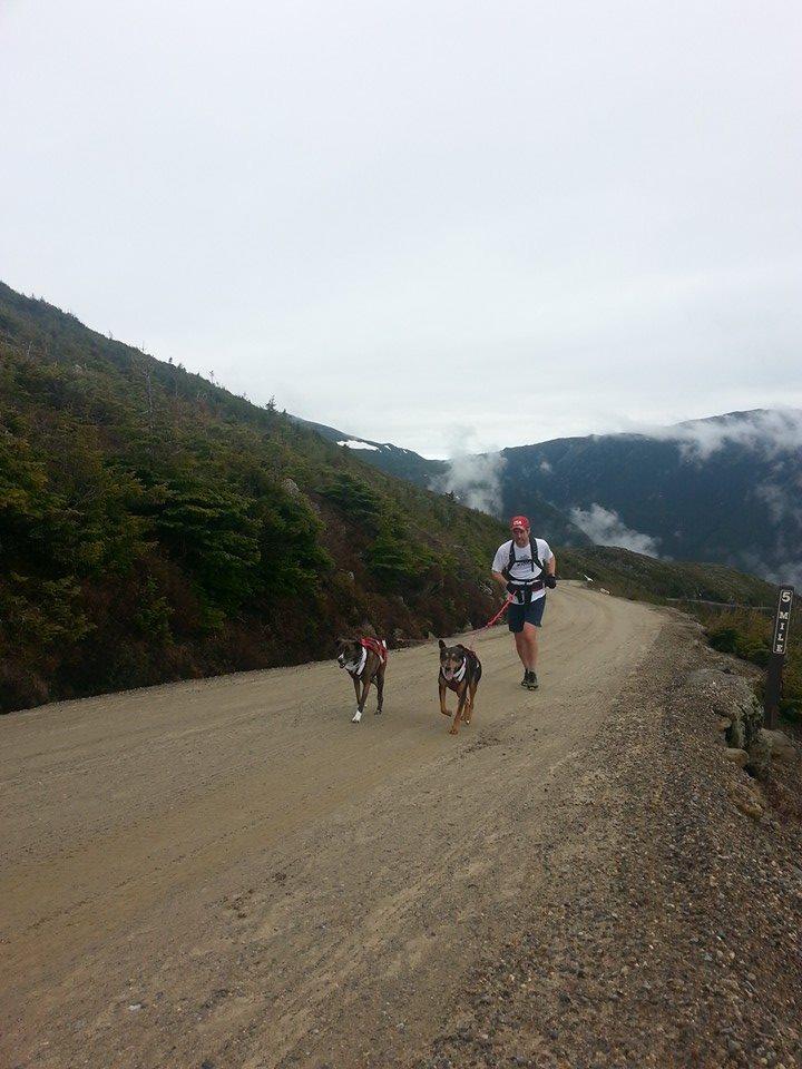 Kirsch Dogs Mt Washington II