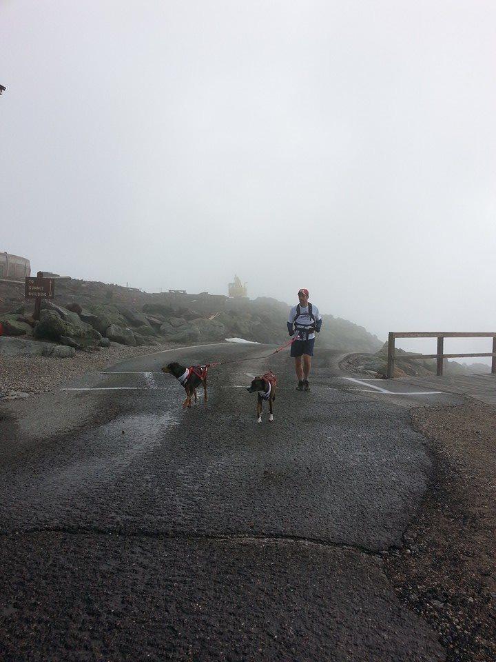 Kirsch Dogs Mt Washington