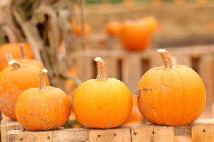 pumpkins clipart 11.10.14